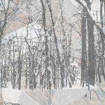 Andrea Scarpellini_Snowy woods